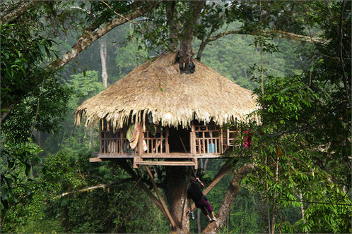 Bokeo, Laos: Gibbon Experience