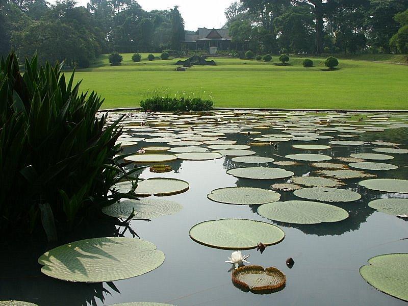 Bogor: Botanischer Garten Kebun Raya