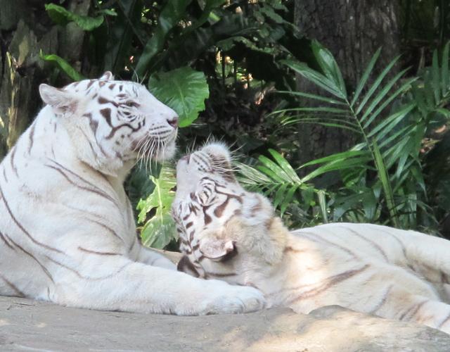 Singapur Zoo