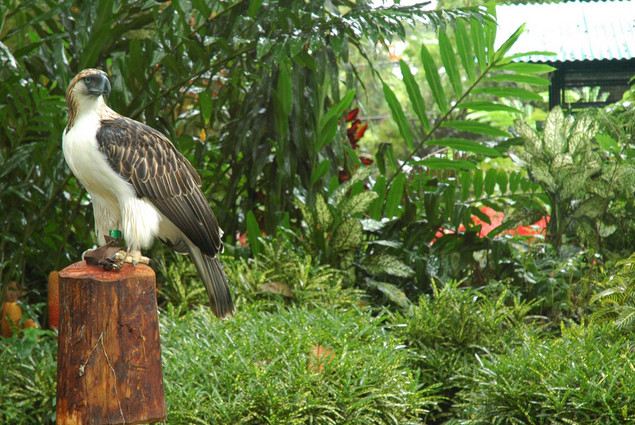 Philippine Eagle Center Davao