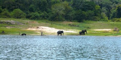 Gal Oya Nationalpark