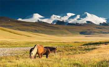 Mongolei Steppe, Berge, Landschaft, Pferde