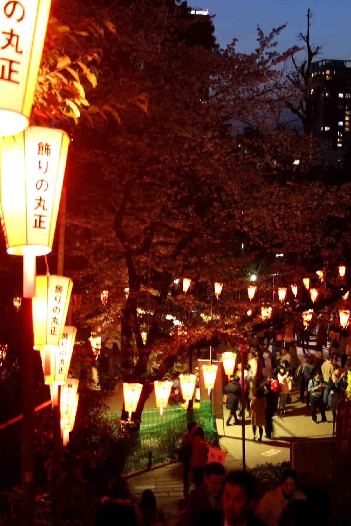 Ueno Park Tokyo Kirschblüte Nacht